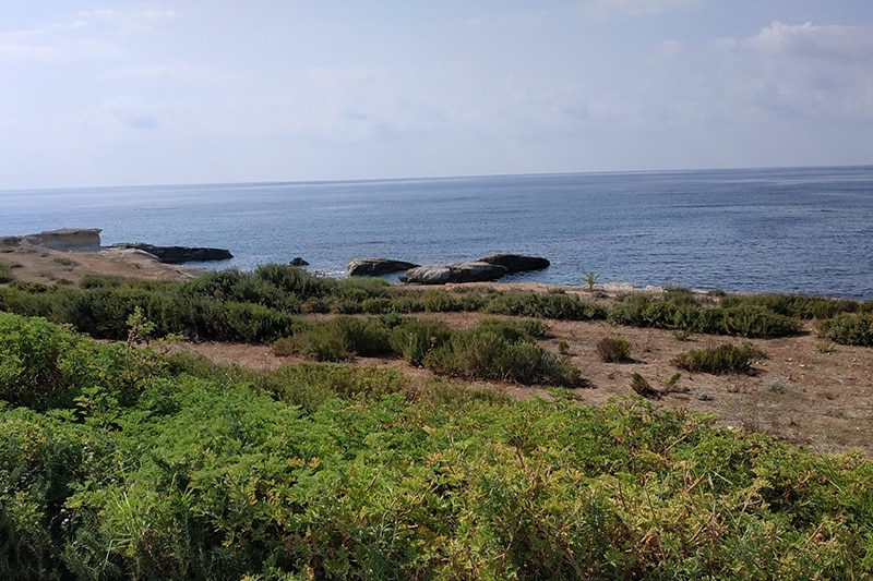 Expat Life in Paphos