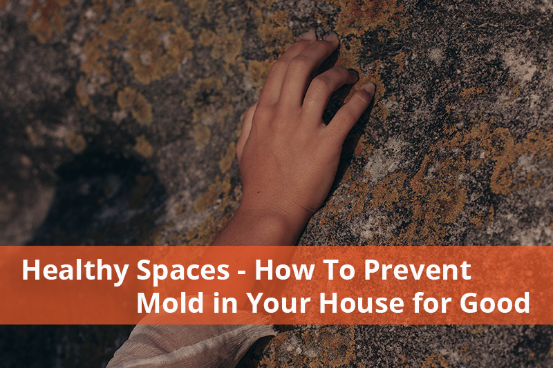 prevent mold in your house